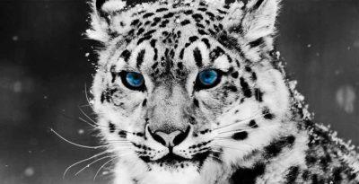 ANIMALS NATURE CANVAS WALL ART