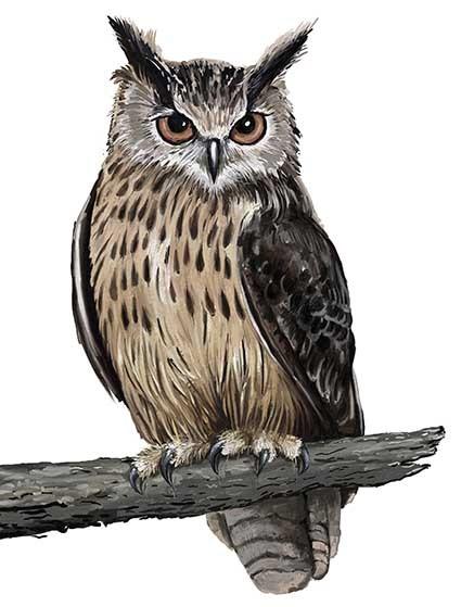 T70 Regular Fit Printed T-Shirt Owl