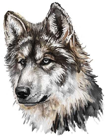 T71 Regular Fit Printed T-Shirt Wolf