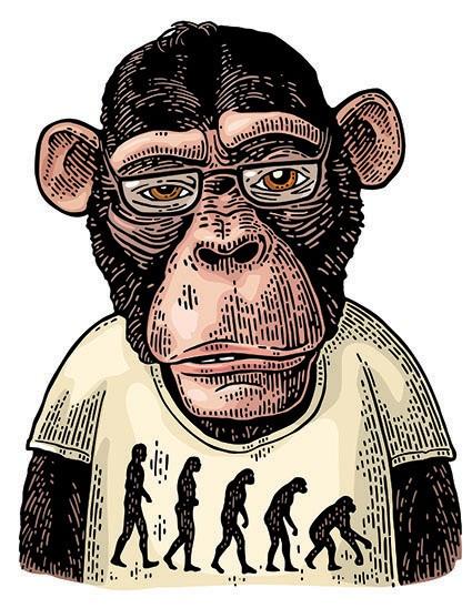 T795 Regular Fit Printed T-Shirt  Monkey