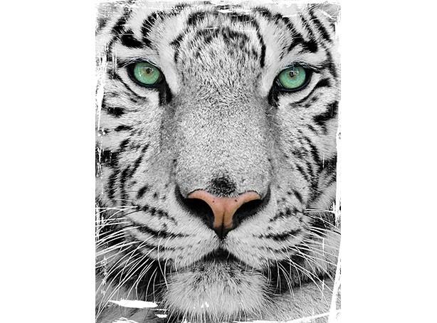 T95 Regular Fit Printed T-Shirt Tiger